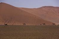 Namibia_Safari